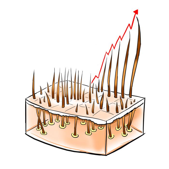 regeneração dos fios
